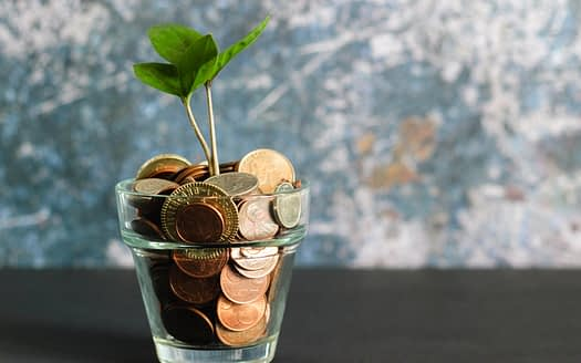 fengshui tips for new home buy money tree